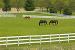 Horses- Farm