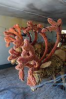 Battle of Flowers Museum, Le Mont de Corvées, Insel Jersey, Kanalinseln