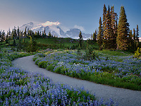 Path and wildflowers with Mt. Rainier in Mt. Rainier National Park, Washington