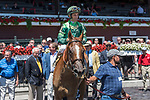 Paid Up Suscriber (no.2) wins the Grade III 2017 Alfred G. Shuvee Handicap July 30 at Saratoga Race Course, Saratoga Springs, NY. The winner, ridden by John Velazquez and trained by Chad Brown, won in hand over the 1 1/8 miles. (Robert Simmons/Eclipse Sportswire)