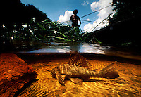 """Smokin Hassar"" underwater with Amerindian John anthony fishing in his dugout canoe in top of frame.  They call the Loricariid catfish Smoking Hassar because it breathes in and out when you pull it out of the water and the locals put cigarettes in its lips and it blows smoke."