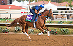 DEL MAR, CA - OCTOBER 02: Sadler's Joy, owned by Woodslane Farm and trained by Thomas Albertrani, exercises in preparation for Longines Breeders' Cup Turf at Del Mar Thoroughbred Club on November 2, 2017 in Del Mar, California. (Photo by Anna Purdy/Eclipse Sportswire/Breeders Cup)