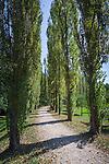 Germany, Baden-Wuerttemberg, Tauber Valley, Bad Mergentheim: poplar alley at Castle Garden | Deutschland, Baden-Wuerttemberg, Taubertal, Bad Mergentheim: Pappelalle im Schlossgarten