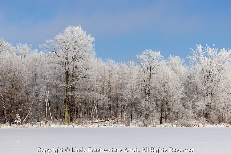 Hoarfrost on a beautiful winter day in northern Wisconsin. Do you see the whitetail at the forest's edge?