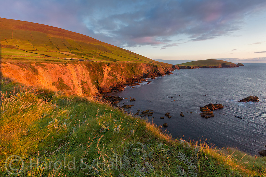The setting sun illuminates the grasses and the cliffs above Dunquin Pier.