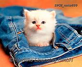 Xavier, ANIMALS, REALISTISCHE TIERE, ANIMALES REALISTICOS, cats, photos+++++,SPCHCATS899,#a#, EVERYDAY