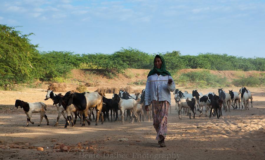goat herder near Bagan, Myanmar