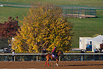 November 3, 2020: Whitmore, trained by trainer Ron Moquett, exercises in preparation for the Breeders' Cup Sprint at Keeneland Racetrack in Lexington, Kentucky on November 3, 2020. John Voorhees/Eclipse Sportswire/Breeders Cup/CSM