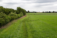 Hadrian's Wall Footpath often follows the edge of farmers' fields.  Cumbria, England, UK.
