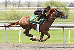 07 April 2011.  Hip #23 RACONTEUR  A.P. Indy - Miss Kate colt consigned by Wavertree Stables.