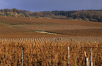 Europe/France/Champagne-Ardenne/51/Marne/Env Bouzy: Vignoble champenois