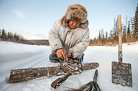 Evenki hunter Ion Maxsimovic demonstrates how to set a trap for a wolf. Hunting with these traps is banned by an agreement, signed in 2008, by Russia, Canada and the EU but as wolf numbers soared, hunters in Siberia began to use them again for lack of an available humane alternative.  An explosion of the wolf population has had a devastating impact on the reindeer herds that are the lifeblood for the indigenous Evenki people of the Siberian state of Sakha (Yakutia). In 2012 it was estimated that between 12,000 - 16,000 reindeer were lost to wolf attacks, at a cost of around 15,000 rubles (153.00 GBP) per animal. In response the local authorities introduced a three month hunt with a bounty to encourage hunters to target wolves with the aim of reducing their numbers from 3,500 to 500. Hunters earn 400 USD (280 GBP) per proven kill, plus a further 400 USD (280 GBP) selling the skin to the fur trade. Ion Maksimovic, the region's most celebrated wolf hunter, killed 23 wolves in 2014, more than any other hunter, and in doing so won a prize of 300,000 roubles (3,060 GBP) and a snowmobile.