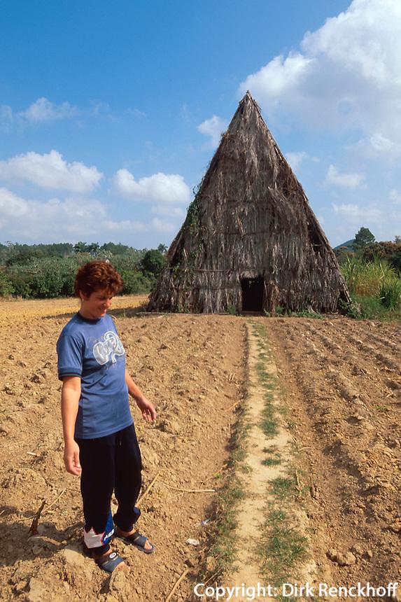 Cuba, Tabak-Trockenhaus im Valle de Vinales, Provinz Pinar del Rio, Unesco-Weltkulturerbe