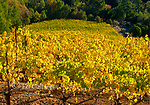 Autumn, Upper Syrah Block, Front Porch Farm, Healdsburg, Sonoma County, California