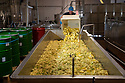 04/05/17<br /> <br /> Fresh elderflowers are mixed with lemon, water and sugar.<br /> <br /> Belvoir Fruit Farms – a Truly Blossoming Business<br /> <br /> Belvoir Fruit Farms has appointed the UK's first Elderflower Manager to help source more elderflowers and to grow it better in their own 90 acres of plantations, near Grantham, Lincolnshire.  The £25.2m turnover, family owned soft drinks producer, has been making its award winning Elderflower Cordial for 35 years and in 2018 saw sales of it grow by over 20%.  Yesterday saw the first large infusion of its Organic Elderflower Cordial for 2019 made using elderflowers from blossoms grown in its own plantations and picked by the local community.<br />  <br /> Belvoir currently fills 25-30 million bottles a year across its full range, catering for a robust domestic market and an export market encompassing 36 countries.  Growth in demand for Belvoir drinks has necessitated the business recently investing £1.3million in a new rinser, filler and capper machine as well as a new palletiser and automatic wrapper which has increased efficiencies, has dramatically reduced the company's waste and has the potential to double the factory's production capacity.<br />  <br /> All Rights Reserved, F Stop Press Ltd +44 (0)7765 242650 www.fstoppress.com rod@fstoppress.com