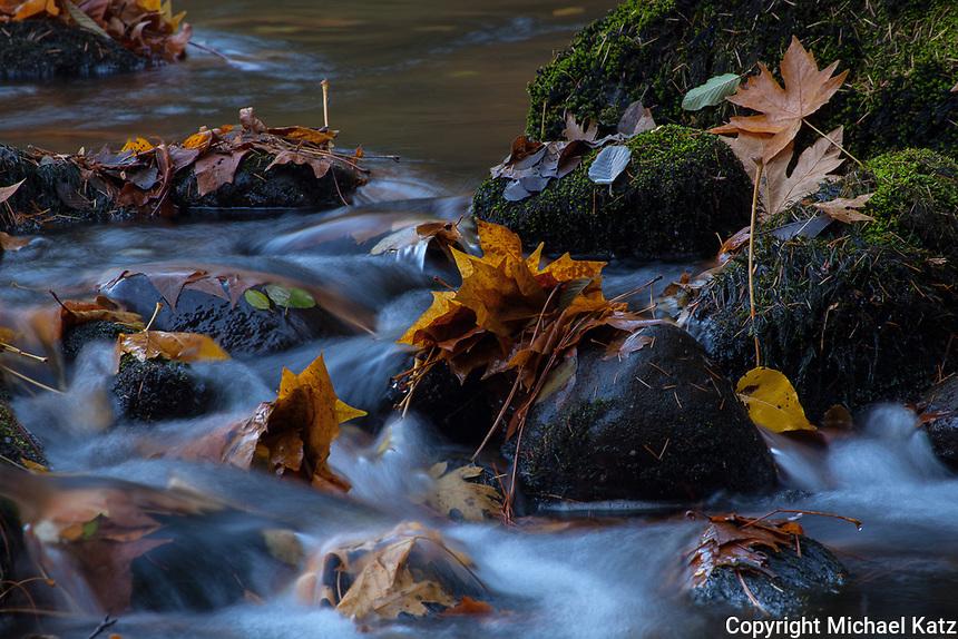Autumn Leaves, Merced River