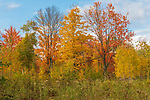 Autumn trees on a September day in northern Wisconsin.