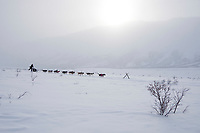 Zack Steer runs on the trail in Ptarmigan Valley shortly after leaving the Rainy Pass checkpoint during the 2010 Iditarod, Southcentral Alaska