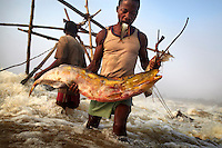 A fishermen removes a huge carp from a trap attached to a wooden scaffold at Boyoma Falls (known locally as Wagenia Falls). To keep his hands free he holds a small fish in his mouth. This is the last of seven cataracts below which the Lualaba River becomes the Congo. For generations members of the Wagenia tribe have built and maintained these structures in the same manner described by Henry Morton Stanley, after whom the falls were also once named, during his navigation of the Congo in 1874-77.