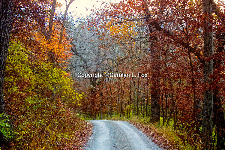 Fall trees line a roadway in Mid-America.