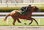 07 April 2011.  Hip #144 Hard Spun - French Satin colt, consigned by Eddie Woods.