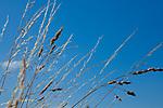 Europa, DEU, Deutschland, Baden-Wuerttemberg, Schwaebische Alb, Vorland der mittleren Schwaebischen Alb, Mittleres Albvorland, Gras, Graeser, Natur, Umwelt, Landschaft, Jahreszeiten, Stimmungen, Landschaftsfotografie, Landschaften, Landschaftsphoto, Landschaftsphotographie, Wetter, Wetterelemente, Wetterlage, Wetterkunde, Witterung, Witterungsbedingungen, Wettererscheinungen, Meteorologie, Wettervorhersage, <br /> <br /> [Fuer die Nutzung gelten die jeweils gueltigen Allgemeinen Liefer-und Geschaeftsbedingungen. Nutzung nur gegen Verwendungsmeldung und Nachweis. Download der AGB unter http://www.image-box.com oder werden auf Anfrage zugesendet. Freigabe ist vorher erforderlich. Jede Nutzung des Fotos ist honorarpflichtig gemaess derzeit gueltiger MFM Liste - Kontakt, Uwe Schmid-Fotografie, Duisburg, Tel. (+49).2065.677997, ..archiv@image-box.com, www.image-box.com]