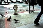 """A busy San Francisco street."" CDPSR ""Street"""