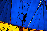 Raimundo, a nine-year old Colombian boy, performs a flying trapeze act at the Circo Anny, a family run circus wandering the Amazon region of Ecuador, 4 July 2010. The Circo Anny circus belongs to the old-fashioned traveling circuses with a usual mixture of acrobat, clown and comic acts. Due to the general loss of popularity caused by modern forms of entertainment such as movies, TV shows or internet, these small family enterprises balance on the edge of survival. Circuses were pushed away and now they have to set up their shows in more remote villages. The circus art and culture is slowly dying.