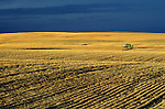 Combine in wheat field harvesting the crop at sunset before storm Eastern Washington State USA