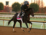 Madone, trained by trainer Simon Callaghan, exercises in preparation for the Breeders' Cup Juvenile Fillies Turf at Keeneland Racetrack in Lexington, Kentucky on October 31, 2020.