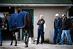 LOUISVILLE, KENTUCKY - MAY 03: McCraken, owned by Whitham Thoroughbreds LLC and trained by  Ian R. Wilkes, is walked back his barn after exercising in preparation for the Kentucky Derby at Churchill Downs on May 3, 2017 in Louisville, Kentucky. (Photo by Douglas DeFelice/Eclipse Sportswire/Getty Images)