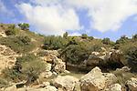 Ein Kedem in Nahal Neder