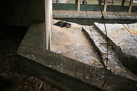 CHINA. Hubei Province. Wuhan. A bear in an enclosure in Wuhan zoo. In many of China's 'second-tier' cities, away from the modern zoos in the megacities of Beijing and Shanghai, hide a plethora of smaller unknown zoos. In these zoos, what can only be described as animal abuse is subtly taking place in the form of deprivation of light, space, sanitation and social contact with other animals. Living in awful conditions, these animals spend there days entertaining tourists who seem oblivious to the animals' plight and squalid existence. 2008.