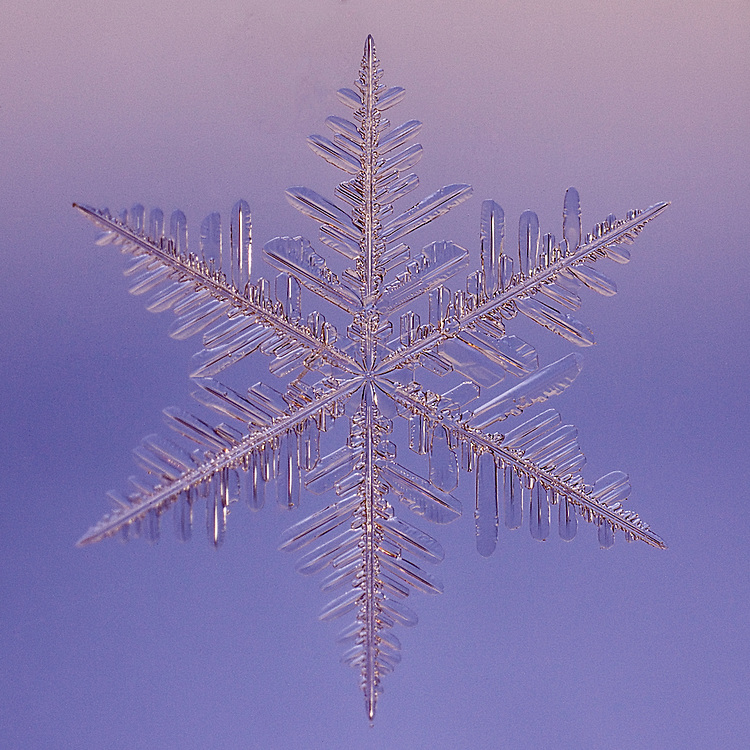 Snowflake Liling - Macro photograph of a Fernlike Stellar Dendrite