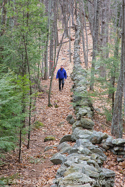 A man walks on trail along a stonewall in Sandown, New Hampshire Town Forest during the spring months