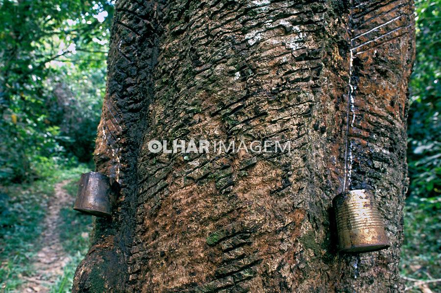 Extração de látex em Xapuri, Acre. 1992. Foto de Ricardo Azoury.