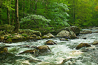 Spring along Middle Prong of Little River, Tremont