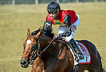 SARATOGA SPRINGS, NY - AUGUST 27: A.P. Indian #11, ridden by Joe Bravo, wins the Forego Stakes on Travers Stakes Day at Saratoga Race Course on August 27, 2016 in Saratoga Springs, New York. (Photo by Scott Serio/Eclipse Sportswire/Getty Images)