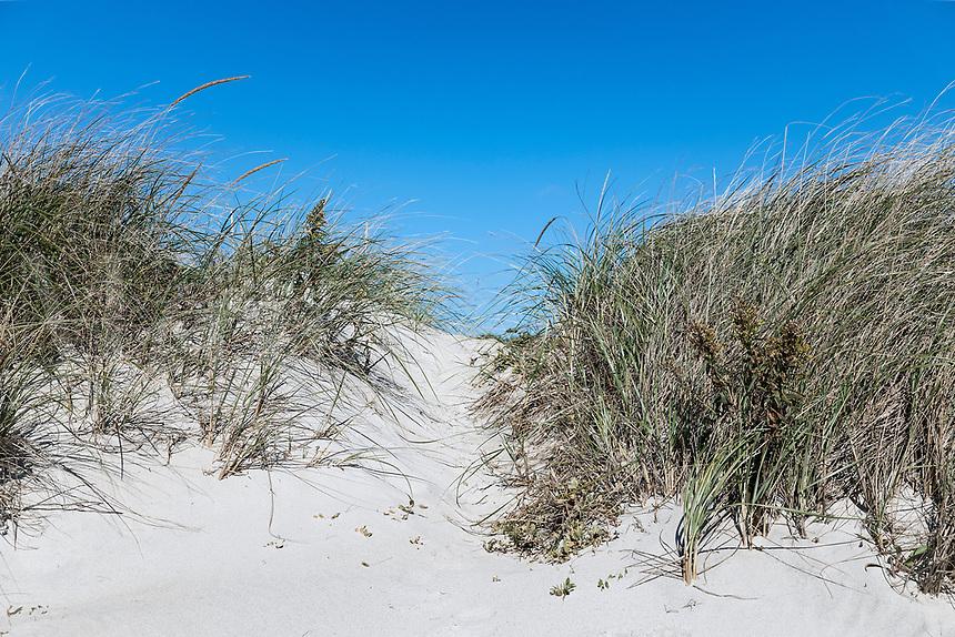 Dune path to the beach, West Beach, Westport, Massachusetts, USA.