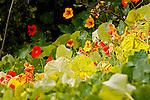 Wildflowers, Crystal Cove, CA