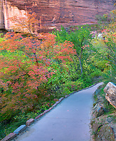 Path with fall color. Zion National Park, Utah