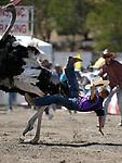 Virginia City International Camel Races 2018