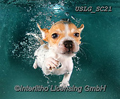 REALISTIC ANIMALS, REALISTISCHE TIERE, ANIMALES REALISTICOS, dogs, paintings+++++SethC_Caru_IMG_1399v5,USLGSC21,#A#, EVERYDAY ,underwater dogs,photos,fotos ,Seth