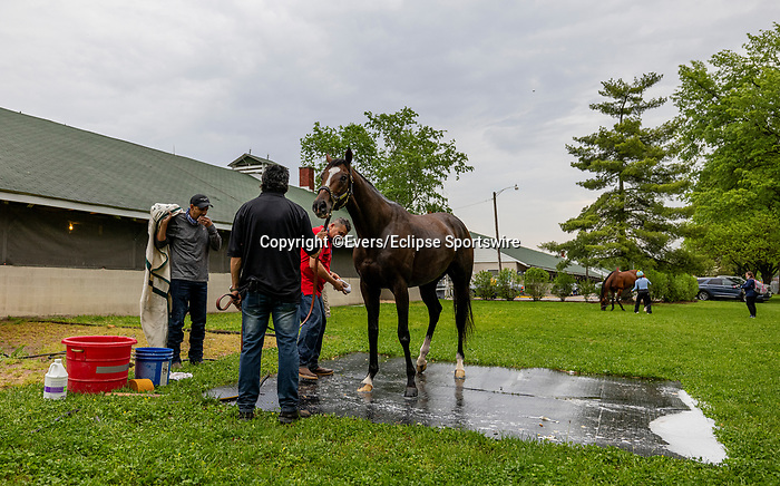 April 29, 2021: Derby contender Hot Rod Charlie gets a batch at Churchill Downs in Louisville, Kentucky on April 29, 2021. EversEclipse Sportswire/CSM