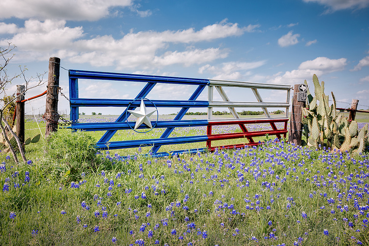 """""""Lone Star Gate with Bluebonnets"""" - Considered to be the Bluebonnet Capital of North Texas, this picturesque scene is located in Ennis, Texas - a southeastern suburb of Dallas, Texas. Every April, bluebonnets attract thousands of visitors from across the state. As historian Jack Maguire so aptly wrote, """"It's not only the state flower but also a kind of floral trademark almost as well known to outsiders as cowboy boots and the Stetson hat."""" He goes on to affirm that """"The bluebonnet is to Texas what the shamrock is to Ireland, the cherry blossom to Japan, the lily to France, the rose to England and the tulip to Holland."""""""