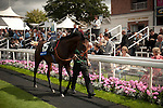 20 August 2010: DEAUVILLE POST walks the parade ring before the first race on the last day of the Welcome to Yorkshire Ebor Festival at York.