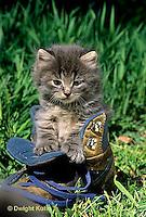 SH32-008z  Cat - kitten playing at 4 weeks