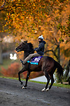 November 3, 2020: Gypsy King, trained by trainer Wesley A. Ward, exercises in preparation for the Breeders' Cup Juvenile Turf at Keeneland Racetrack in Lexington, Kentucky on November 3, 2020. Alex Evers/Eclipse Sportswire/Breeders Cup