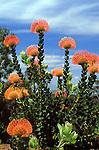South Africa, Cape Town, Kirstenbosch: National Botanical Garden