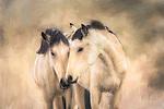 Western horses - mustangs of Nevada